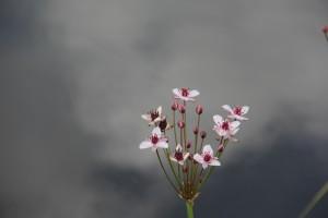 Nu er der plantet Brudelys i kanalen i Brandts Have. Vegetationen er næsten skåret helt ned, så der er ikke meget at se og slet ikke Brudelys som måske blomster til juli og et par måneder frem.